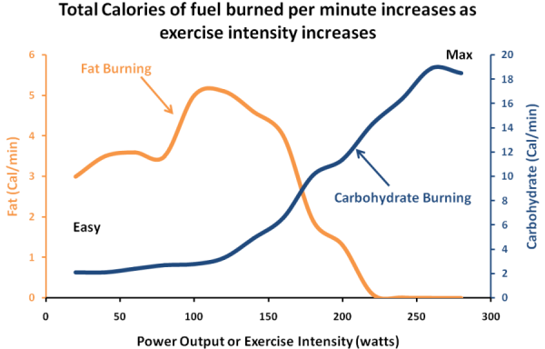 Exercise-Metabolism-Fat-v-Carbohydrate