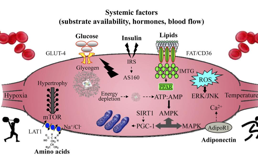 aminosyror innan sömn