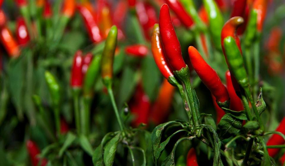 #234 Capsaicin – Starka kryddor och prestation
