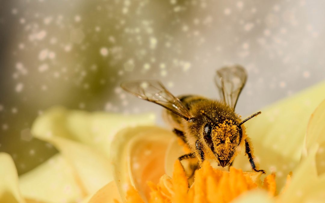 #251 – Prestera trots pollen